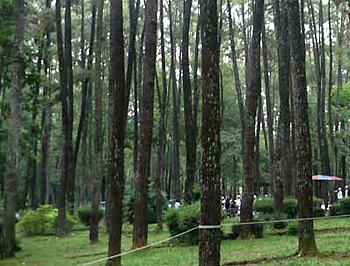 hutan wisata punti kayu sebuah hutan wisata kota di palembang