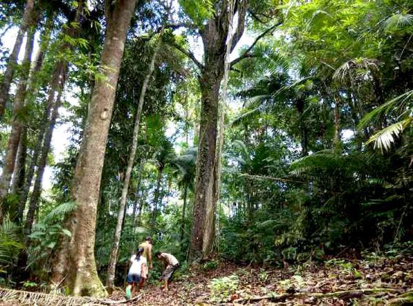 komunitas-tanam-pohon-melalui-aplikasi-seeforest-dari-sumsel-httpt-compdixbiavg-sputarpalembang-httpt-cot5ky76rvwx