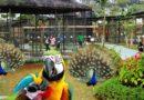 Asiknya Main Di Bird Park Palembang