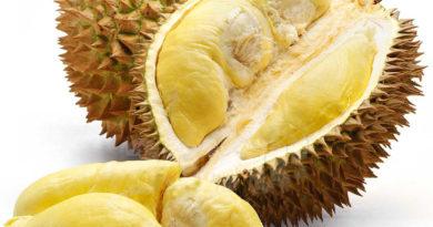Nikmatnya Musim Durian Di Kota Palembang